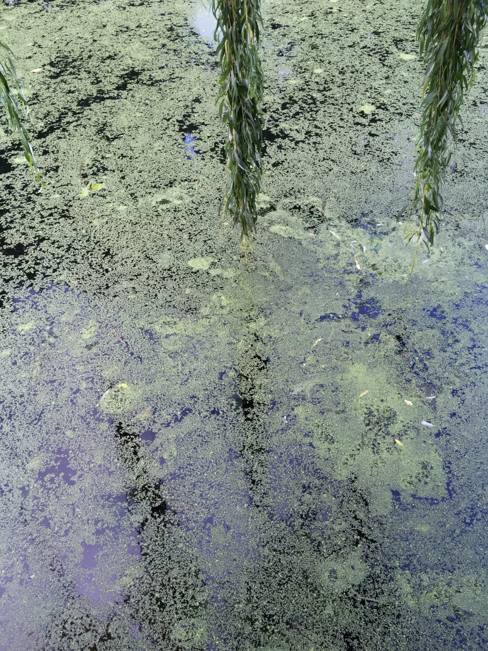 The water in the canals of East London
